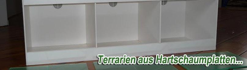 forex terrarium xxl